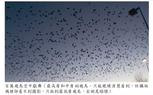 《揭開真相》二十六-提前預言百萬飛鳥到jpg2.png